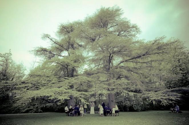 Lustres-arbres-01-662x441